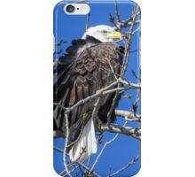 Bald Eagle Over Its Shoulder iPhone Case/Skin