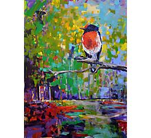 Red Crested Robin in Paradise  Photographic Print