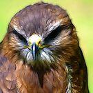 Fractual Falcon by Trevor Kersley
