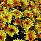 Yellow Mums by joan warburton