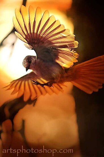 Sunny Bird by artsphotoshop