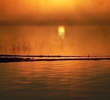 Orange Glow by Gisele Bedard