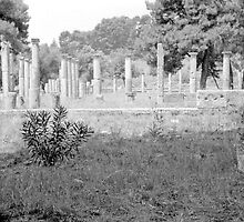 Standing Pillars, Olympia, Greece by Priscilla Turner
