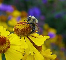 The Last Nectar by marchello