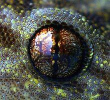 Eye of Newt by Patricia Elliott