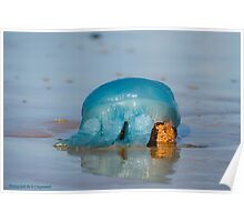 Blue Jellyfish 01 Poster