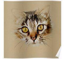 Mister Sprinkles; Tabby Cat Poster