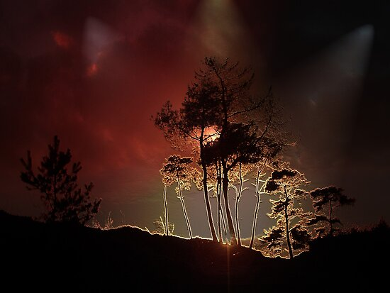 Almost Night Trees by ienemien