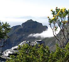 View from the top of Table Mountain by LisaRoberts