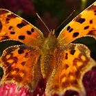 Butterfly by tonymm6491