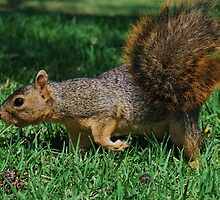 """""""Acorn hunting was always easier when Shorty came along."""" by hoboannie"""