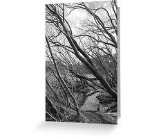 Trees at Lake Daylesford Greeting Card