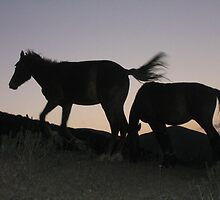Horses at Sunset by KZBlog