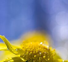 Sunny Monday Blues by Sandy  Taylor Photography