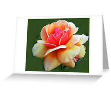 Name that  Rose ?  SOLVED  Greeting Card