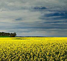 Yorkscape by LukeAustin