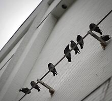 Birds on a Wire by samarmacost