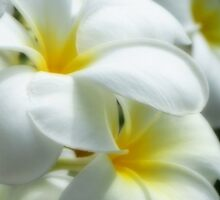 Soft and White by Dave Lloyd
