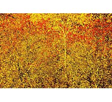 Stylized Golden and Red Shining Fall Foliage  Photographic Print