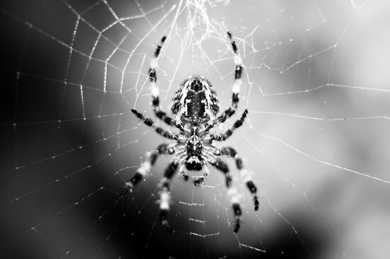 Arachnid II by Stephanie Hillson