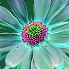 Colorful Daisy by Terri~Lynn Bealle