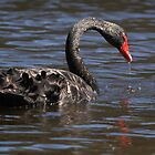 Black Swan by Robert Elliott
