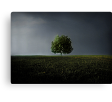 Maybe This Year Will Be Better Than The Last Canvas Print