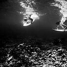 Synchronized Diving  by Rae Threnoworth