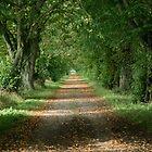 Autumnal Lane by Iani
