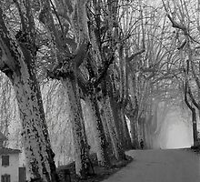 December - Lucca by Jon Julian