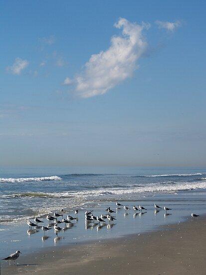 Gulls on a Morning Beach by Jon Julian