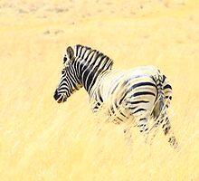 lonely zebra by StefanKruger