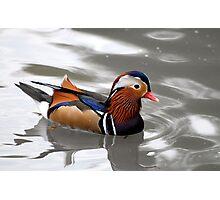 Mandarin Duck  (Aix galericulata) Photographic Print