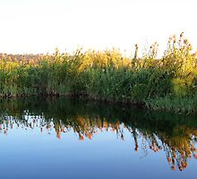 Evening Reflections  by Braedene