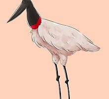 Tuiuiú / Jabiru mycteria (Bird) by talicos