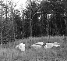 Field, White rock - Stone Mountain by Jon Julian