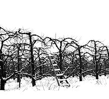 Trees and Ladder in Winter by Pahl