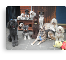 Hold It!   Photo Day at Doggy School. Canvas Print