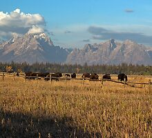 Teton Grazin' by Dennis Jones - CameraView