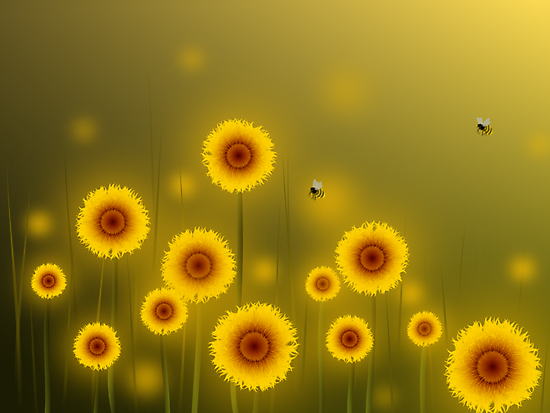 * sunflower field * by franzi