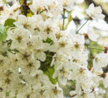 Dreamy White Blossoms - Impressions Of Spring Sticker