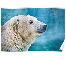 Polar bear closeup head shot Poster