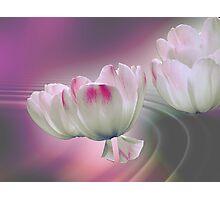 Flying petals Photographic Print