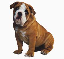 Dog - Bulldog! by Vitalia