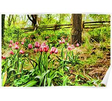 Dreamy Tulip Garden - Impressions Of Spring Poster