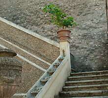 Life in Ancient Steps by JD22