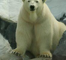 Bear With a Beard? by Sarah Grace