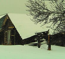 Winter Blues by imagesbydale