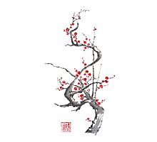 Chinese plum tree blossom sumi-e painting Photographic Print
