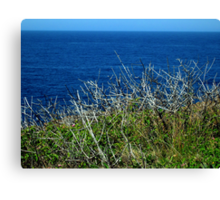 Bombo Brush #1 Canvas Print